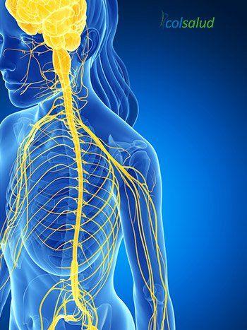 Auriculoterapia - Su conexión con el sistema nervioso autonomo