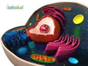 Auriculoterapia para bajar de peso - Teoría Antioxidante