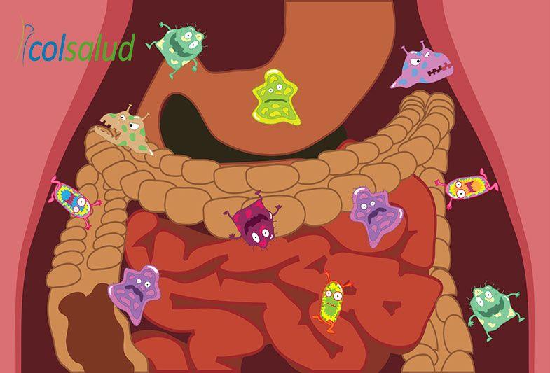 Cómo pueden influir las bacterias intestinales en su peso