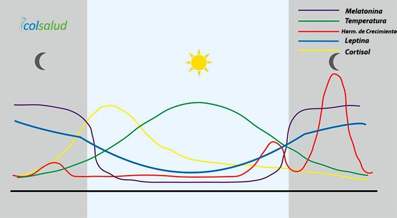 Hormonas durante el ritmo circadiano