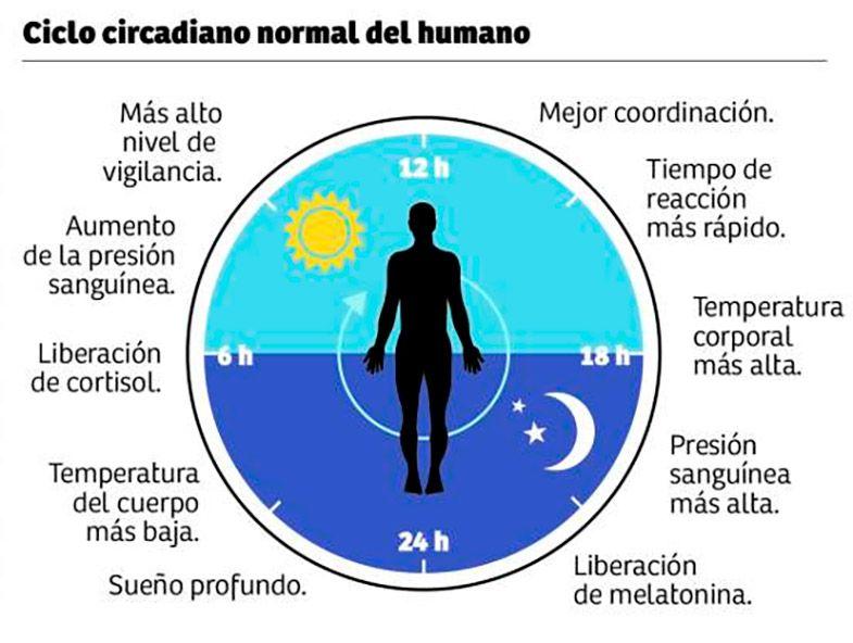 Ritmo circadiano - Ciclo sueño vigilia