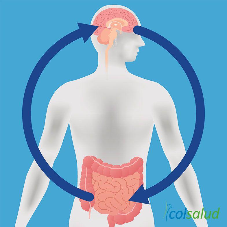 probioticos relación cerebro intestino