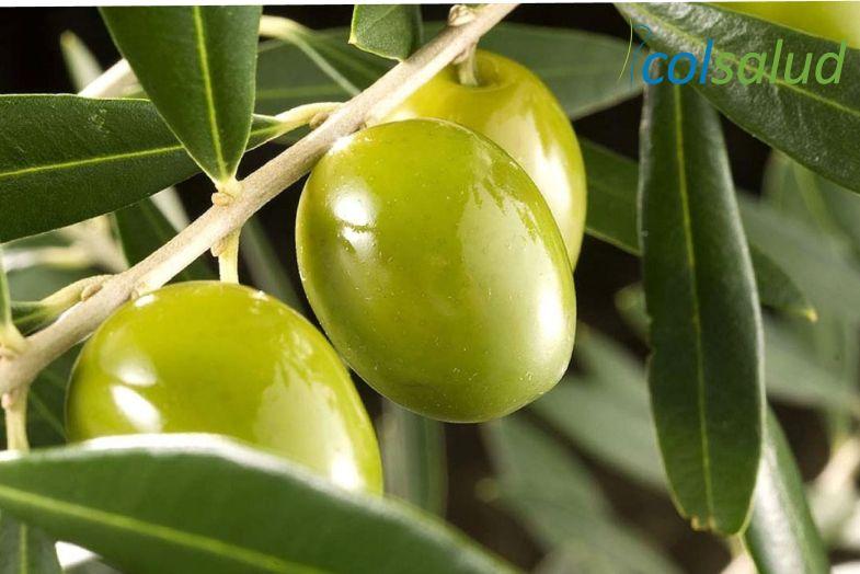aceite de oliva prensado2
